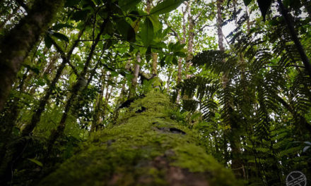 Razones para visitar Costa Rica