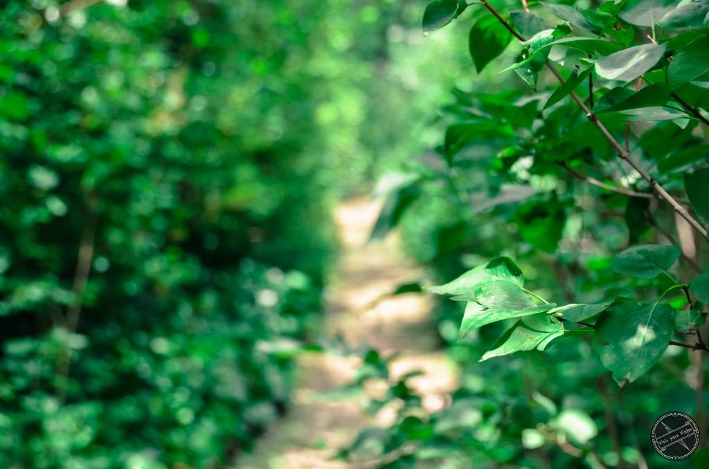 Jardin El Capricho-3455