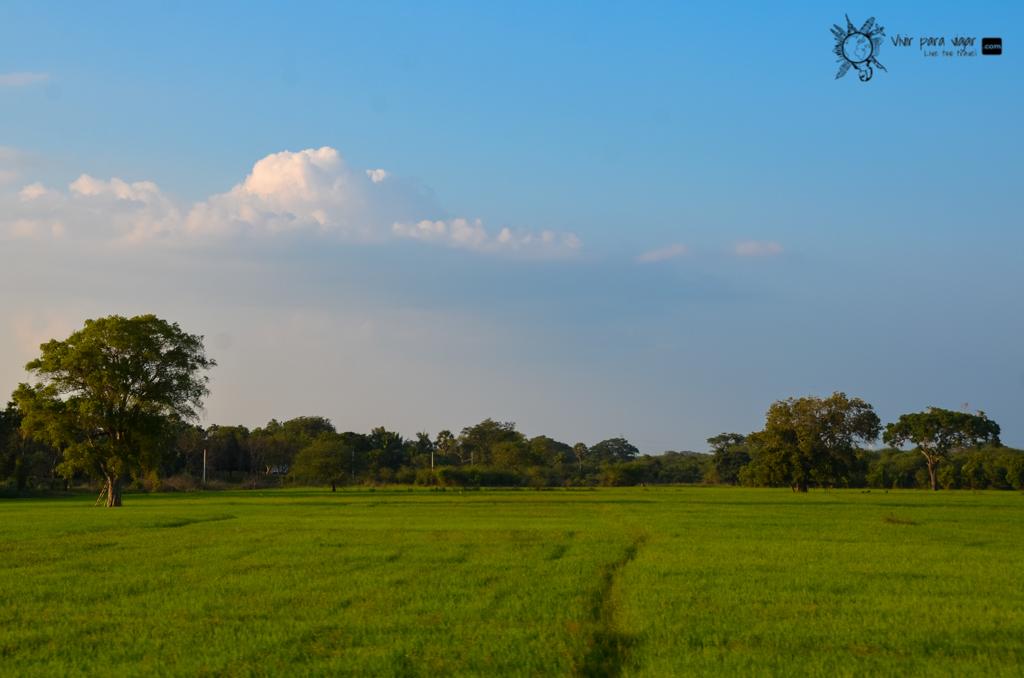 TUK TUK DIARY 6: De Kalpitiya a Anuradhapura