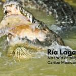Ría Lagartos: no todo es playa en el caribe mexicano
