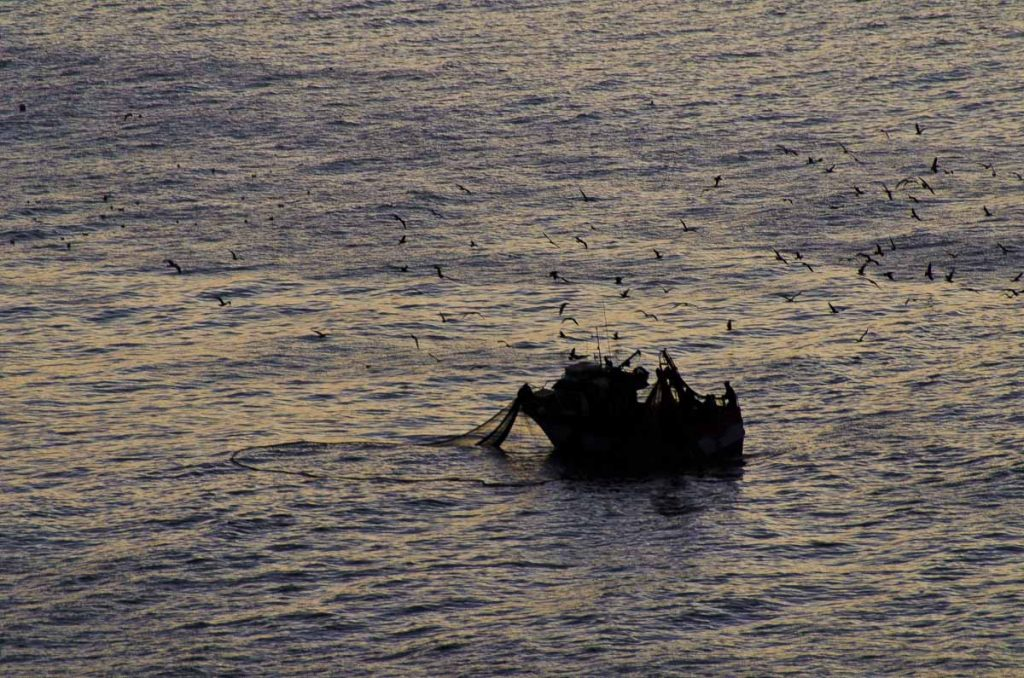 pesca de ultima hora en Nazare
